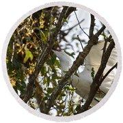 Juvenile Snowy Egret Round Beach Towel