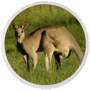 Kangaroo Male Round Beach Towel by Bob Christopher