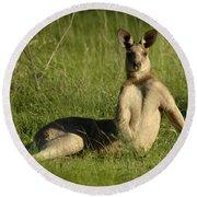 Kangaroo Playing It Cool Round Beach Towel