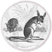Kangaroo Rat Round Beach Towel