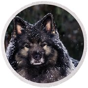 Keeshond Dog, Winnipeg, Manitoba Round Beach Towel