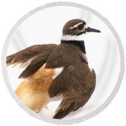 Killdeer - Show Off In The Spring Snow  Round Beach Towel