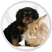King Charles Spaniel And Rabbit Round Beach Towel