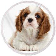 King Charles Spaniel Puppy Round Beach Towel