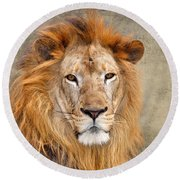 King Of Beasts Portrait Of A Lion Round Beach Towel