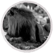 King Of Cats Round Beach Towel