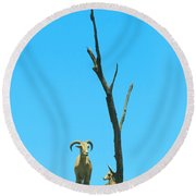 King Of The Hill Round Beach Towel