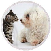 Kitten & Pup Confrontation Round Beach Towel