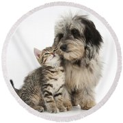 Kitten And Daxie-doodle Puppy Round Beach Towel