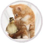 Kitten And Duckling Round Beach Towel
