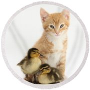 Kitten And Ducklings Round Beach Towel
