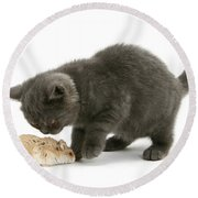 Kitten And Hamster Round Beach Towel