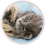 Kitten In Blanket Round Beach Towel