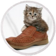 Kitten In Shoe Round Beach Towel