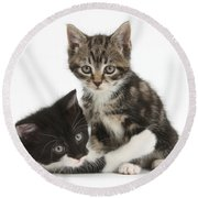 Kitten Pals Round Beach Towel