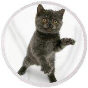 Kitten Reaching Round Beach Towel