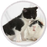 Kitten With Guinea Pig Round Beach Towel