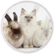 Kitten With Rabbits Round Beach Towel