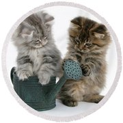 Kittens And Watering Can Round Beach Towel