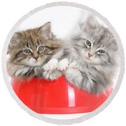 Kittens In A Food Bowl Round Beach Towel