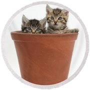 Kittens In Flowerpot Round Beach Towel