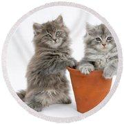 Kittens In Pot Round Beach Towel
