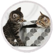 Kittens Playing With Box Round Beach Towel