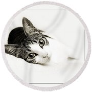 Kitty Cat Greeting Card I Miss You Round Beach Towel