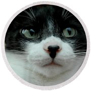 Kitty Closeup Round Beach Towel