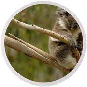 Koala At Work Round Beach Towel