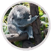 Koala Round Beach Towel by Carol Ailles