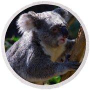 Koala In A Gum Tree Round Beach Towel
