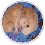 Lab Pups 2 Round Beach Towel