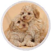Labradoodle Puppies Round Beach Towel