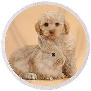 Labradoodle Puppy With Rabbit Round Beach Towel