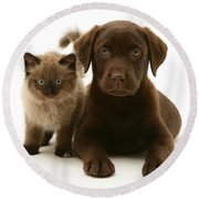 Labrador Pup And Birman-cross Kitten Round Beach Towel