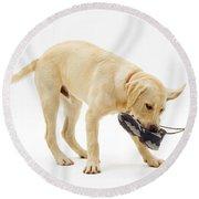 Labrador X Golden Retriever Puppy Round Beach Towel by Jane Burton
