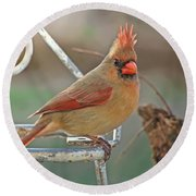 Lady Cardinal With Her Crown On Round Beach Towel