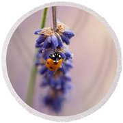 Ladybird And Lavender Round Beach Towel