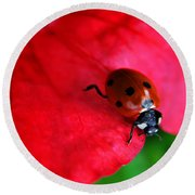 Ladybird On Petal Round Beach Towel