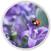 Ladybug And Bellflowers Round Beach Towel