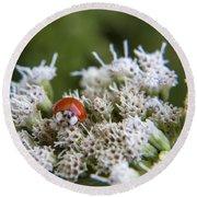 Ladybug Atop The Flowers Round Beach Towel