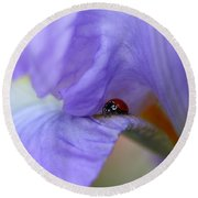 Ladybug On Iris Round Beach Towel