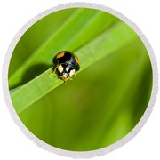 Ladybug With Black-brown And Red Color Round Beach Towel