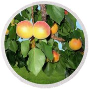 Lake Country Apricots Round Beach Towel
