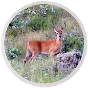 Lake Country Buck Round Beach Towel