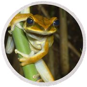 Large Arboreal Hylid Frog Round Beach Towel