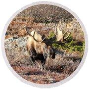 Large Bull Moose Round Beach Towel