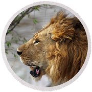 Large Male Lion Profile Portrait Round Beach Towel