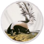Large Tailed Skunk Round Beach Towel